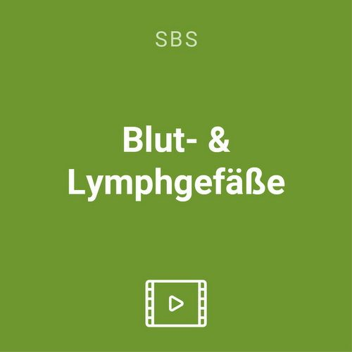 blut lymphgefaesse vod
