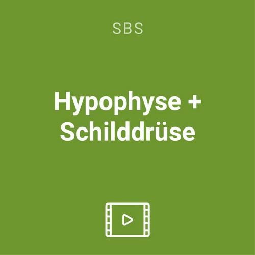 hypophyse schilddruese vod