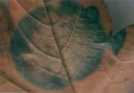 pflanzen 05