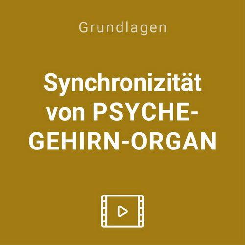 synchronizitaet psyche gehirn organ organ vod