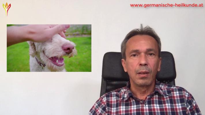 thumbnail ekzem wegen hund