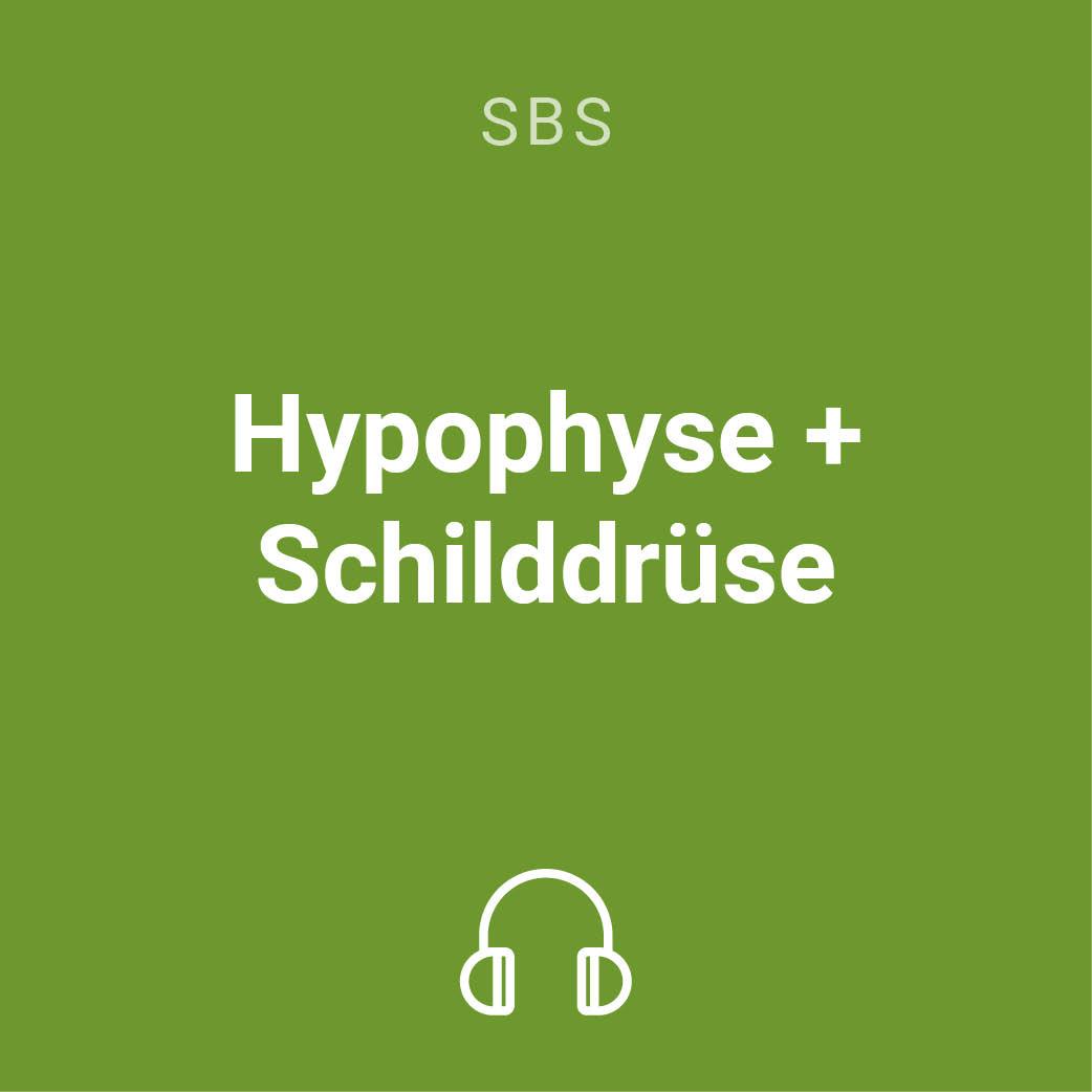 hypophyse schilddruese mp3