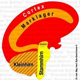 Organ Gehirn – Symptome nach der Germanischen Heilkunde