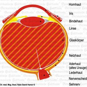 Organ Eye - Symptoms according to the Germanische Heilkunde®