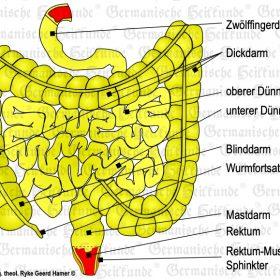 Organ Intestine - Symptoms according to the Germanische Heilkunde®