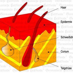 Organ outer Skin - Symptoms according to the Germanische Heilkunde®