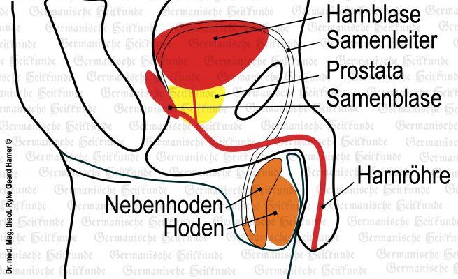 grafik organ hoden 1