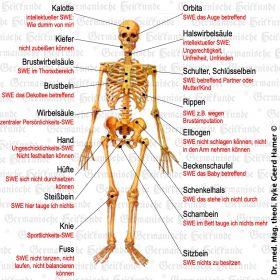 Organ Knochen – Symptome nach der Germanischen Heilkunde