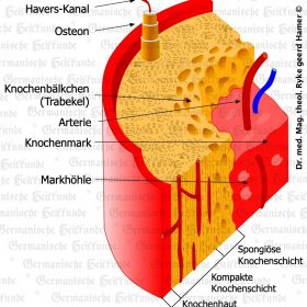 Organ Knochenhaut – Symptome nach der Germanischen Heilkunde