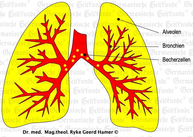 grafik organ lunge