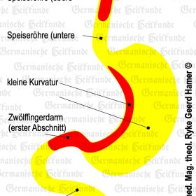 Organ Magen – Symptome nach der Germanischen Heilkunde