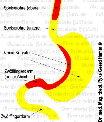 grafik organ magen