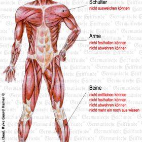 Organ Muskulatur – Symptome nach der Germanischen Heilkunde