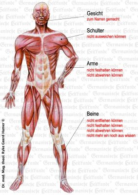 grafik organ muskel