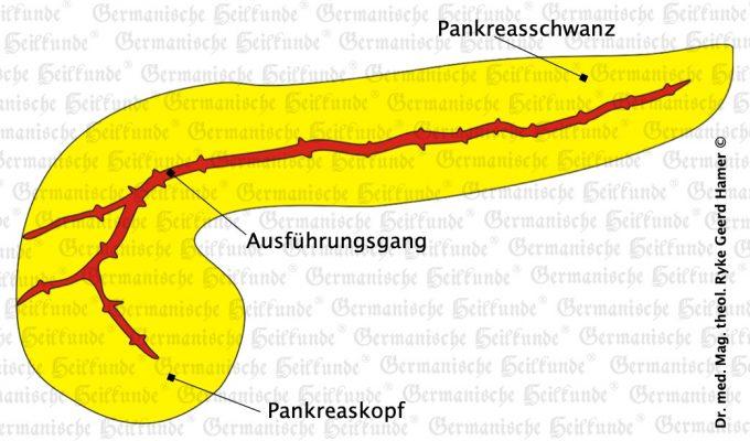 grafik organ pankreas
