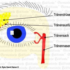 Organ Auge – Symptome nach der Germanischen Heilkunde