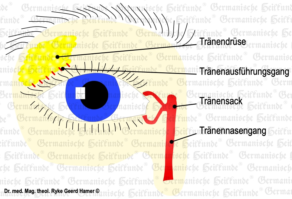 grafik organ traenendruese