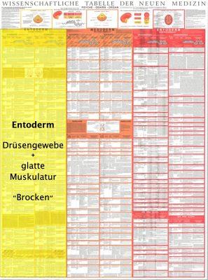 grafik tabelle entoderm