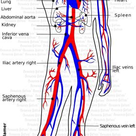 Organ Blood - symptoms according to Germanische Heilkunde®