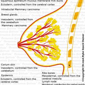 Organ Breast - Symptoms according to the Germanische Heilkunde®