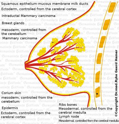 Brust E