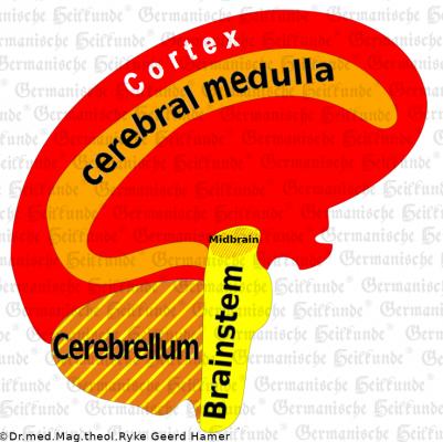 Gehirn E