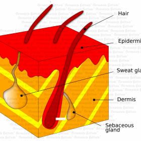 Organ Dermis - Symptoms according to Germanische Heilkunde®