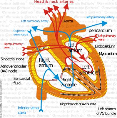 Herz E