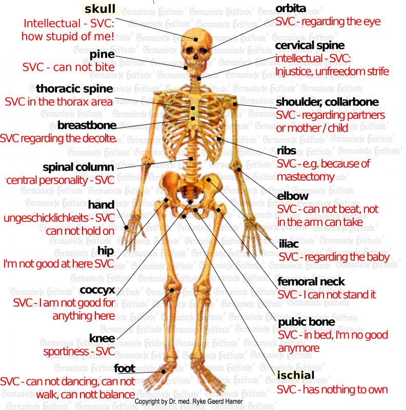 Knochen E 2