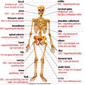 Organ Cartilage - Symptoms according to Germanische Heilkunde®