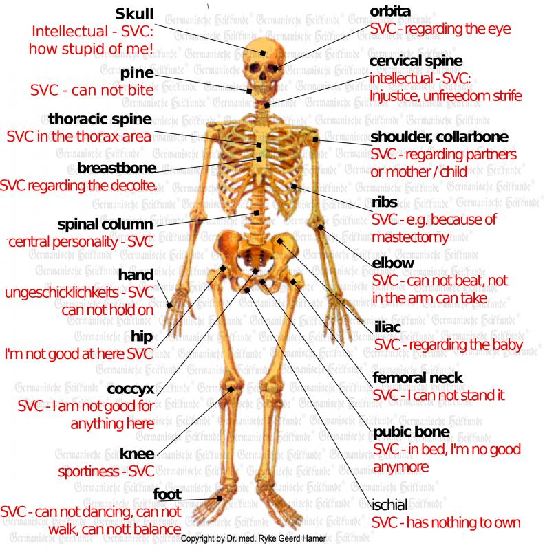 Knochen E