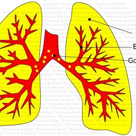 Organ Lung - Symptoms according to Germanische Heilkunde®