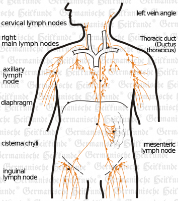 Lymphbahnen E