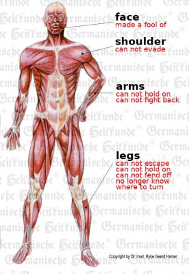 Muskeln E 1