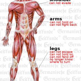 Organ Musculature - Symptoms according to Germanische Heilkunde®