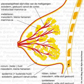 Orgaan borst – symptomen volgens de Germanische Heilkunde
