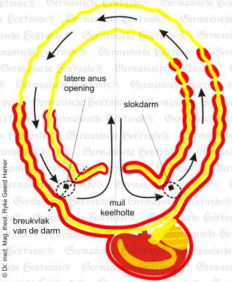 embryo frueh nl