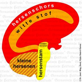 Orgaan hersenen – symptomen volgens de Germanische Heilkunde