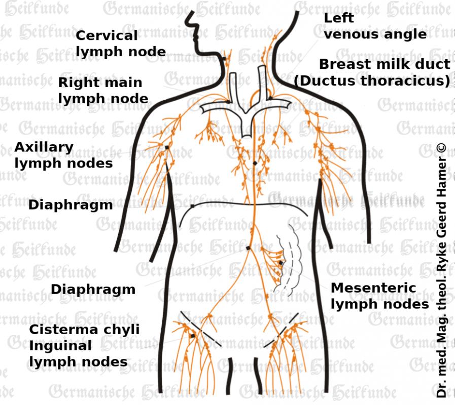grafik organ lymphknoten