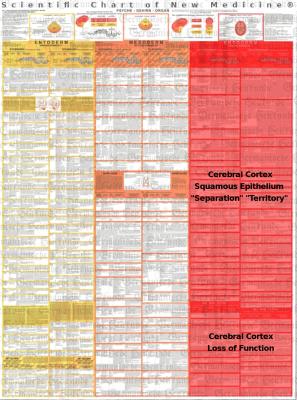 Diagnostic chart cortex