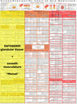 Diagnostic Chart Entoderm