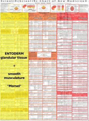 Diagnostic Chart Entoderm