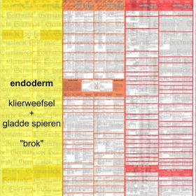 Alvleesklier-ca - Diagnosetabel van de Germanische Heilkunde