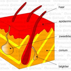 Orgaan buitenste huid – symptomen volgens de Germanische Heilkunde