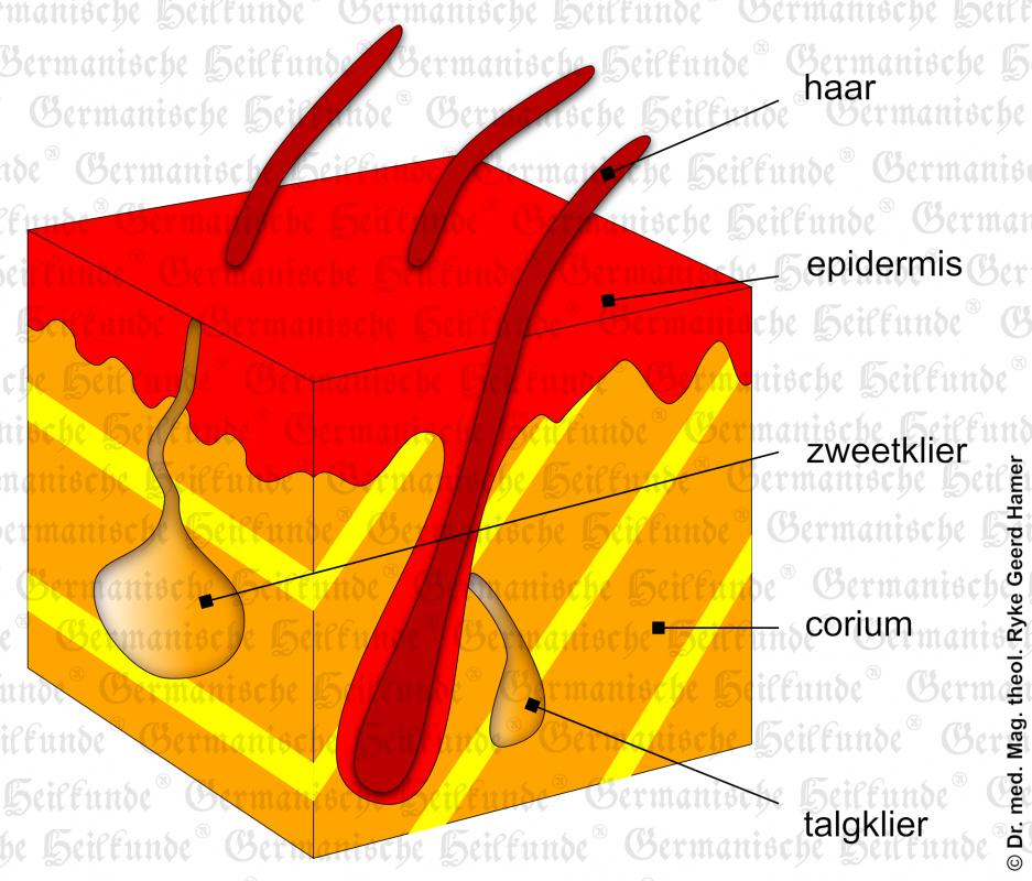 Organ Skin