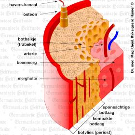 Orgaan botvlies – symptomen volgens de Germanische Heilkunde