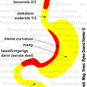 Orgaan maag – symptomen volgens de Germanische Heilkunde