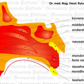 Orgaan amandelen – symptomen volgens de Germanische Heilkunde