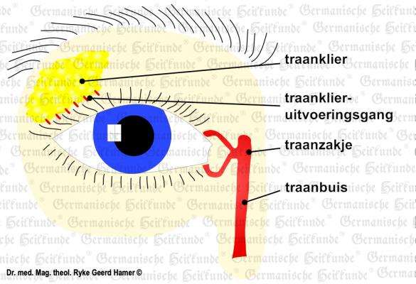 traenendruese nl